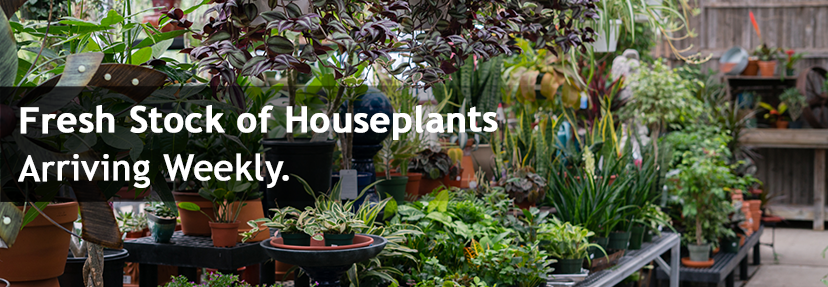 Fresh stock of household plants arriving weekly.